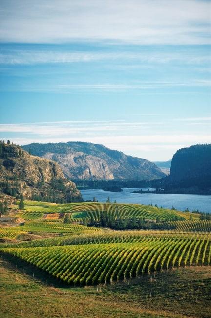 Blick über Weinberge ins Okanagan Valley