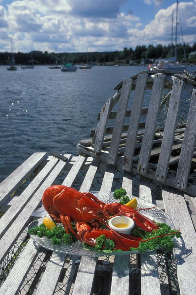 Plate of lobster on trap