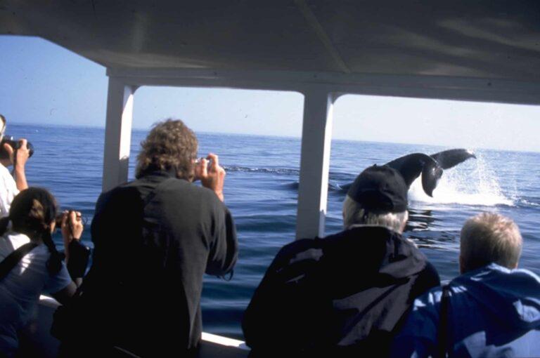Wale beobachten kann man nicht nur vom Boot aus