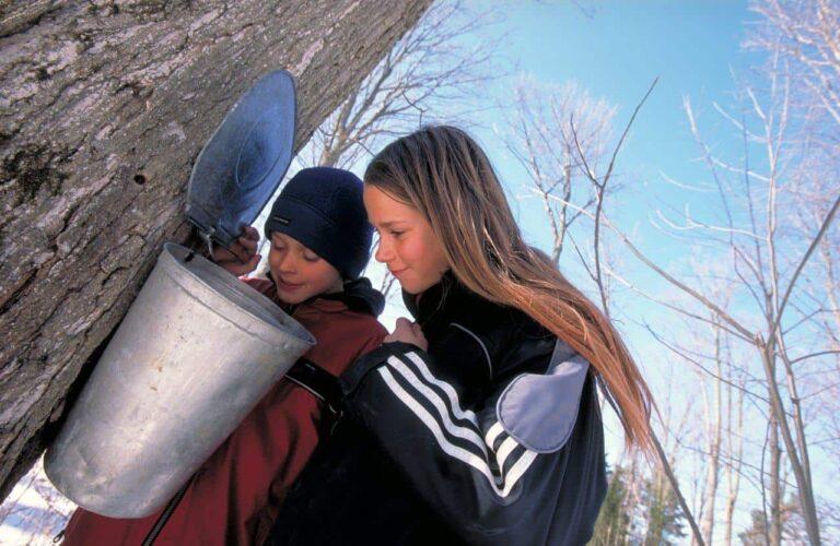 Kinder zapfen Ahornsirup von einem Baum