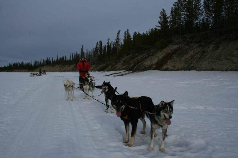 Dog Sledding im Yukon