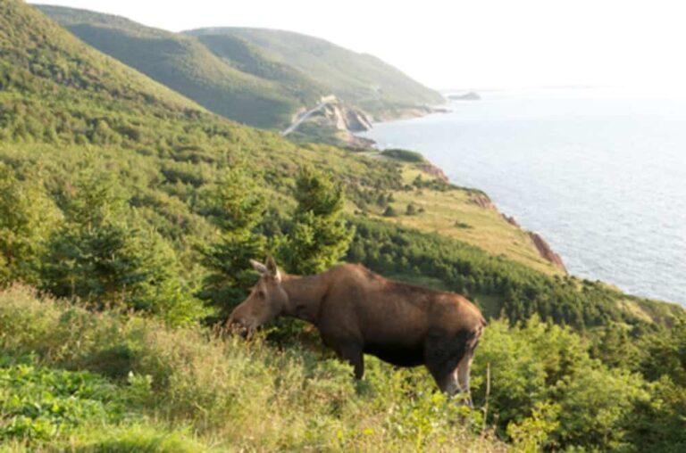 Cabot Trail, Cape-Breton-Highlands-Nationalpark - Foto Nova Scotia Tourism