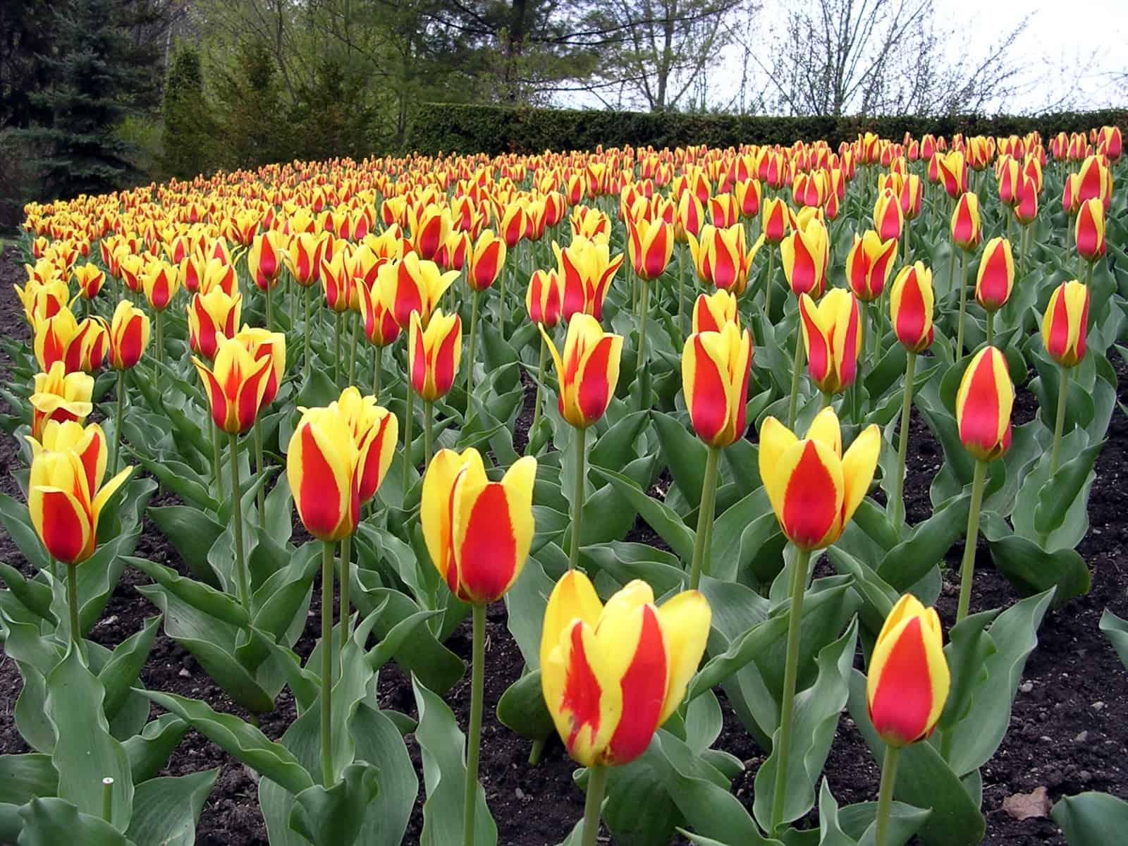 Edwards Gardens im Frühling. Foto emkaplin