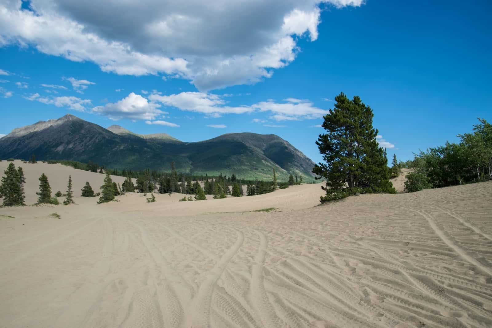 Die kleinste Sandwüste der Welt, Carcross Desert. Foto Daniela Ganz