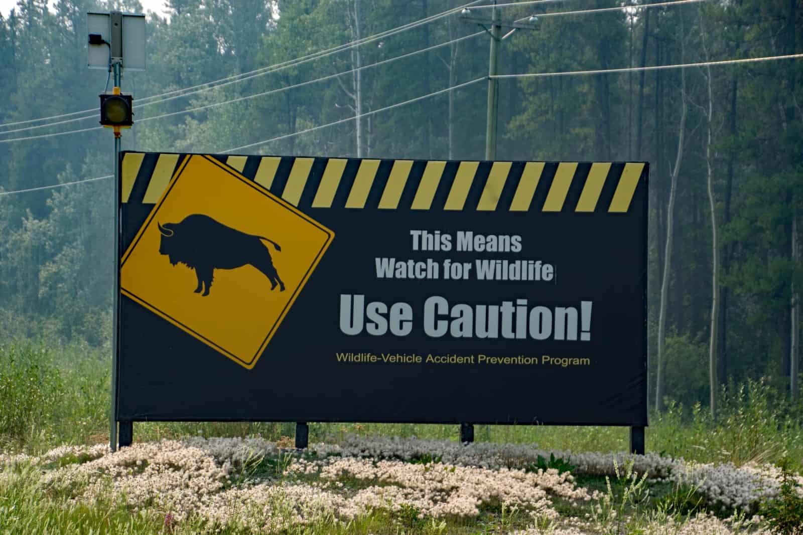 Ein riesiges Bison-Warnschild auf dem Weg zum Muncho Lake. Werden wir diese beeindruckenden Tiere bald live sehen? Foto Daniela Ganz