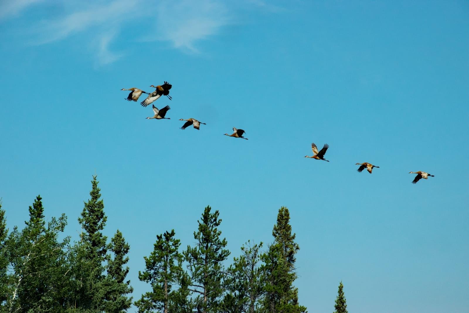 Die Ruhe, die Stille, eine eingeübte Choreographie des Vogelfluges. Die Northwest Territories halten mich in ihrem Bann. Foto Daniela Ganz