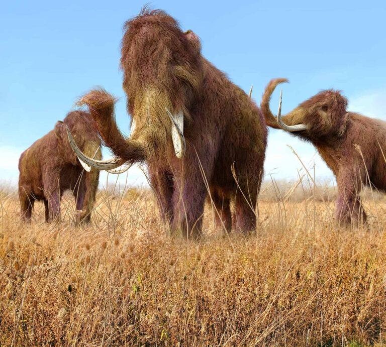 Wollhaarmammute beim Grasen. Foto Depositphoto