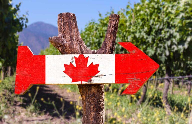 Rebfläche Weinbau mit Kanada Schild.