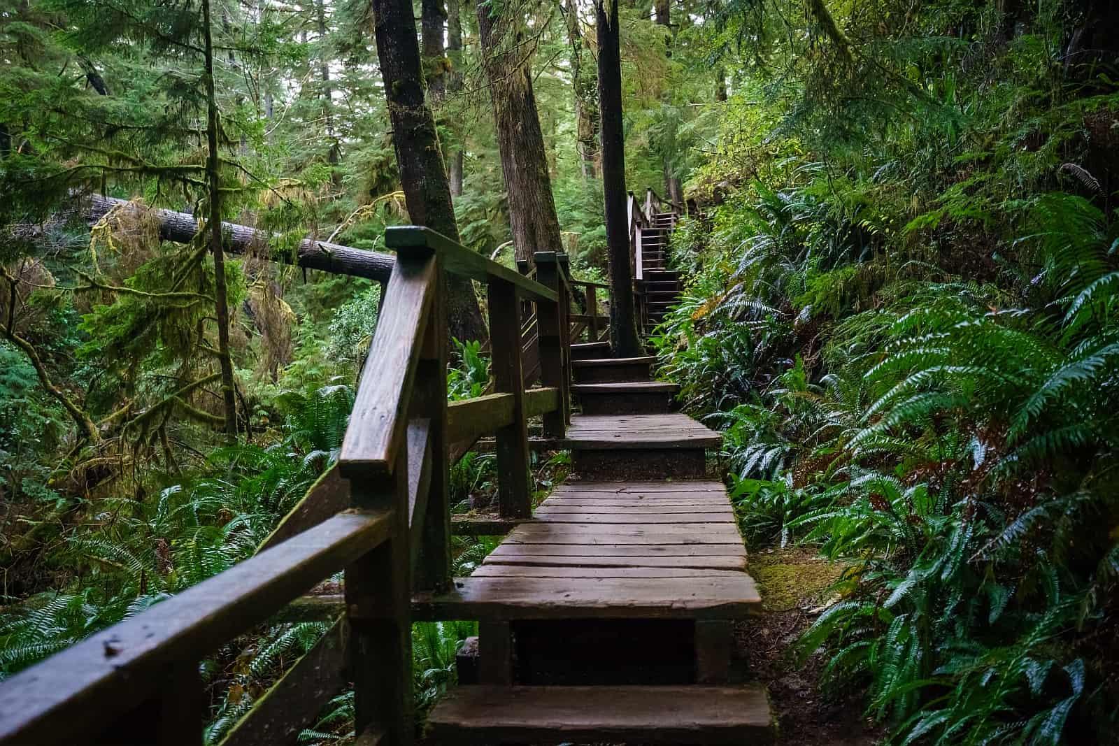 Vancouver Island - Tolle Trails im Regenwald