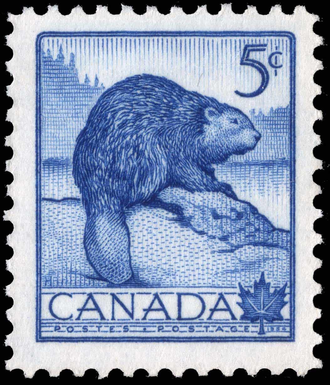 Der Biber ist als Nationaltier Kanadas auch auf Briefmarken verewigt worden, wie hier auf einer 5 Cent Marke aus dem Jahr 1954. Foto Canada Post
