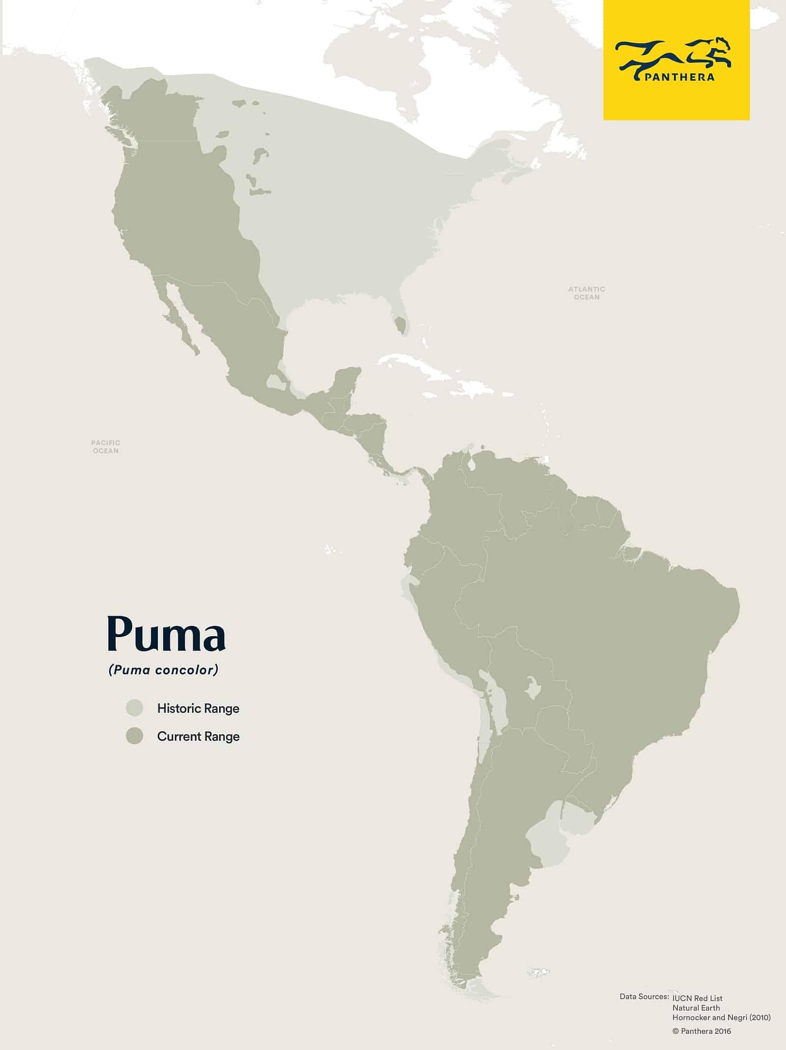 Das Verbreitungsgebiet der Pumas früher und heute. Graphic Panthera