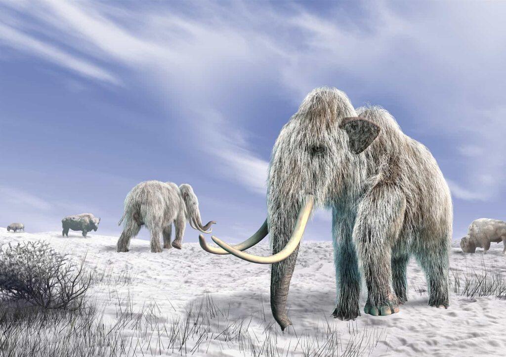 Die Mammute Kanadas waren den klimatischen Bedingungen bestens angepasst. Foto Pixelchaos / Deposit