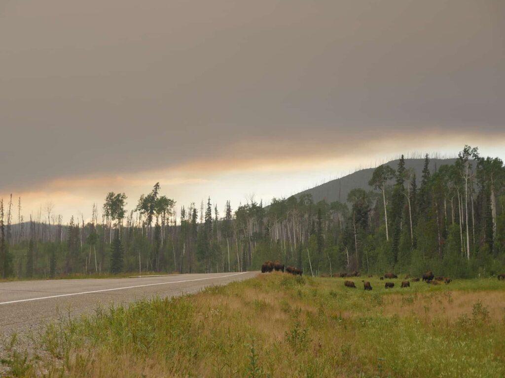Waldbrände nehmen der Natur, Menschen, Tiere und Pflanzen tage-, teilweise wochenlang das Sonnenlicht. Die Rußpartikel in der Luft erschweren das Atmen. Foto apr