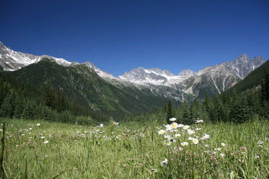 Eine üppige Blumenwiese am Rogers Pass mit der beeindruckenden Bergwelt im Hintergrund. Foto tupungato/Deposit