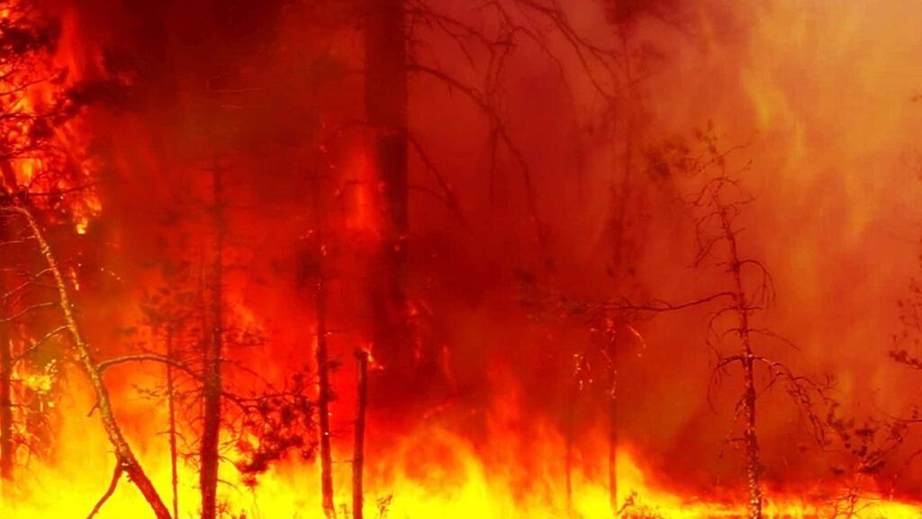 Ein Totalbrand im Wald, eine Feuersbrunst mit Temperaturen von bis zu 800° C. Foto Maestrovideo/Deposit