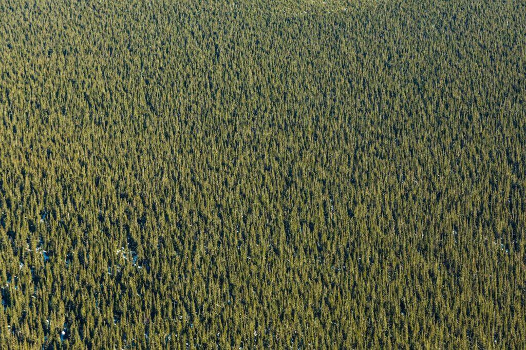 Der boreale Nadelwald in Québec, ein Schatz Kanadas, den es zu bewahren gilt. Foto aetb / Deposit