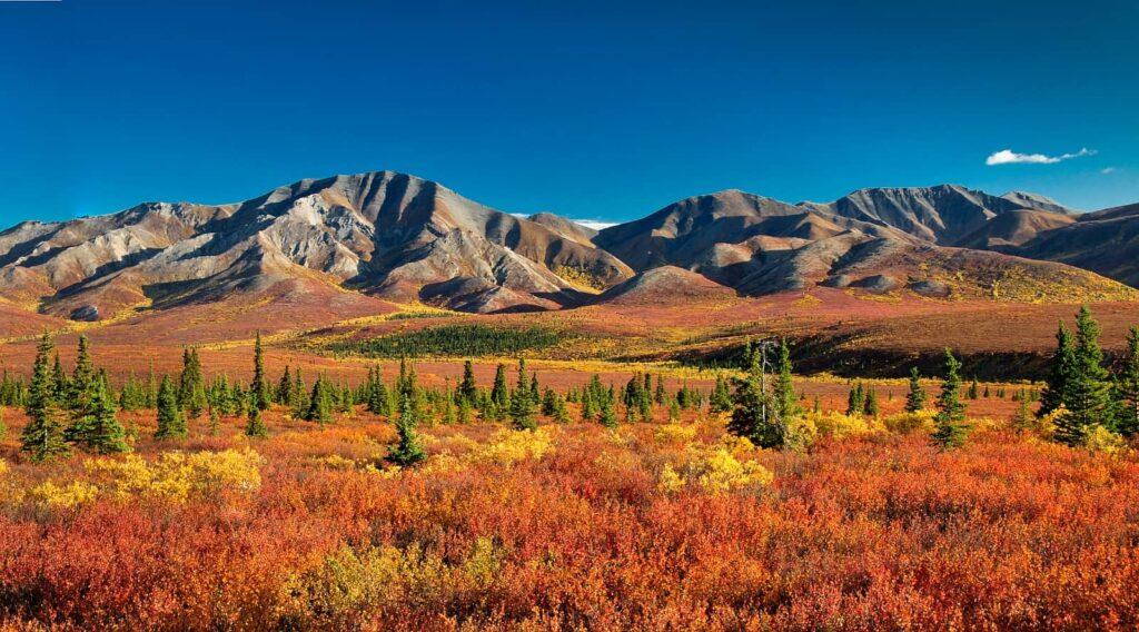 Herbstliche Stimmung in der Tundra im Denali Nationalpark. Foto simsale /Deposit