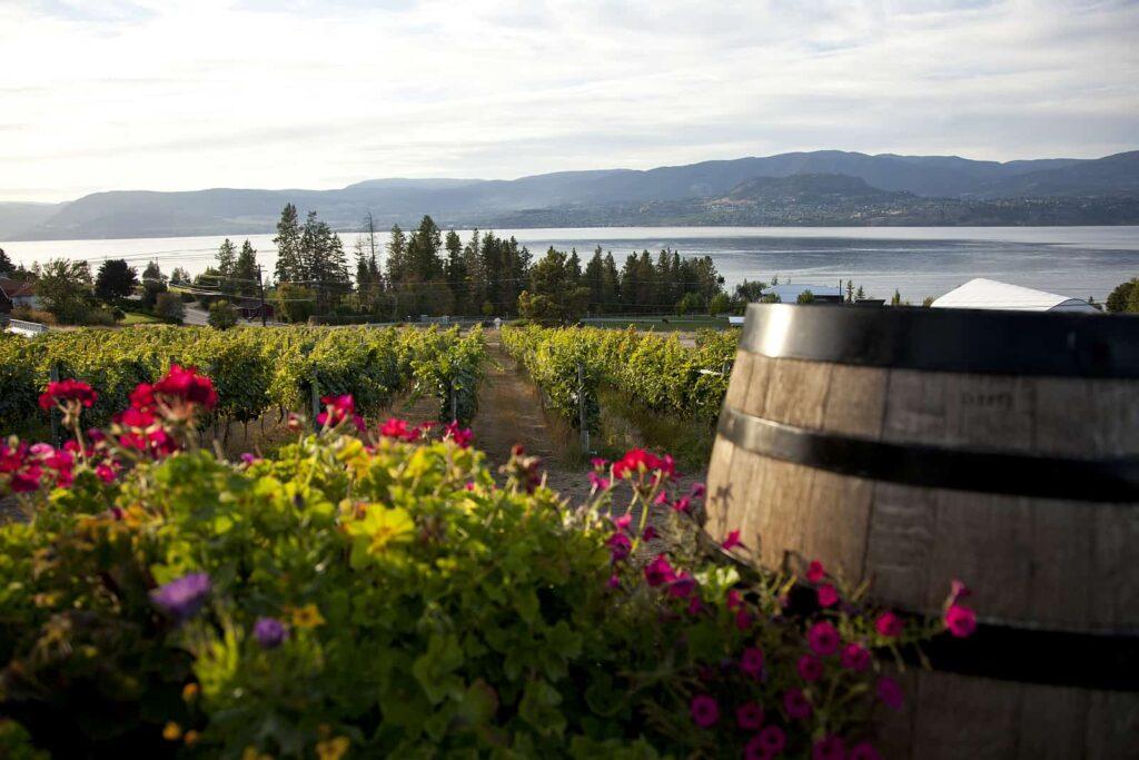 Auf in's Träumchen, gleich nach der Landung in Kelowna. Das liebliche Okanagan Valley mit Weinbau und Blick auf den Okanagan Lake. Foto Canadian Tourism Commission