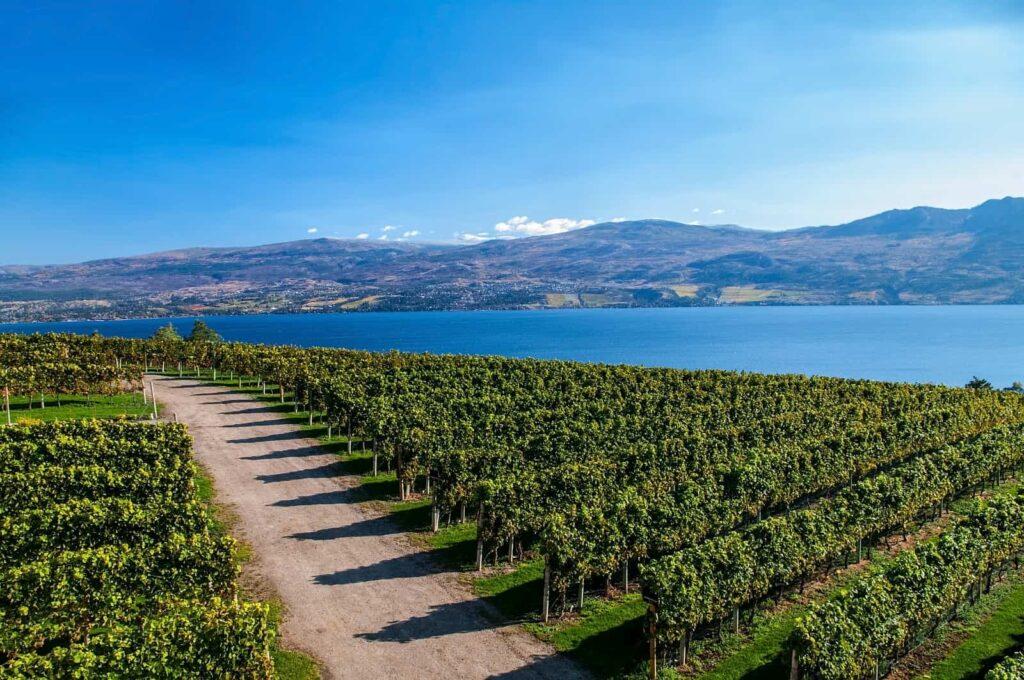 Der Weinbau löst den Obstanbau im Okanagan Valley sukzessive ab. Foto EdCorey / Deposit