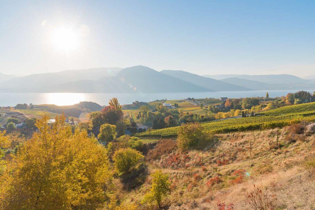 Goldener Oktober in den Weinbergen Naramatas. Wunderschönes Okanagan Valley. Foto amykmitchell / Deposit