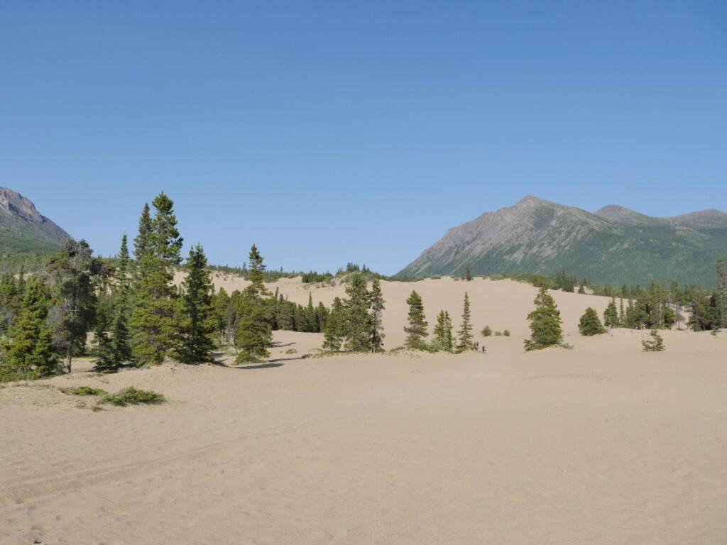 Carcross Desert ist 2,6 Quadratkilometer besondere Natur, geformt aus dem Schwemmsand eines längst vergangenen Eiszeitsees. Foto apr