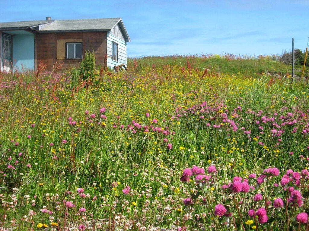 Ein verlassenes Haus in Big Brook. Foto Bernadette Calonego