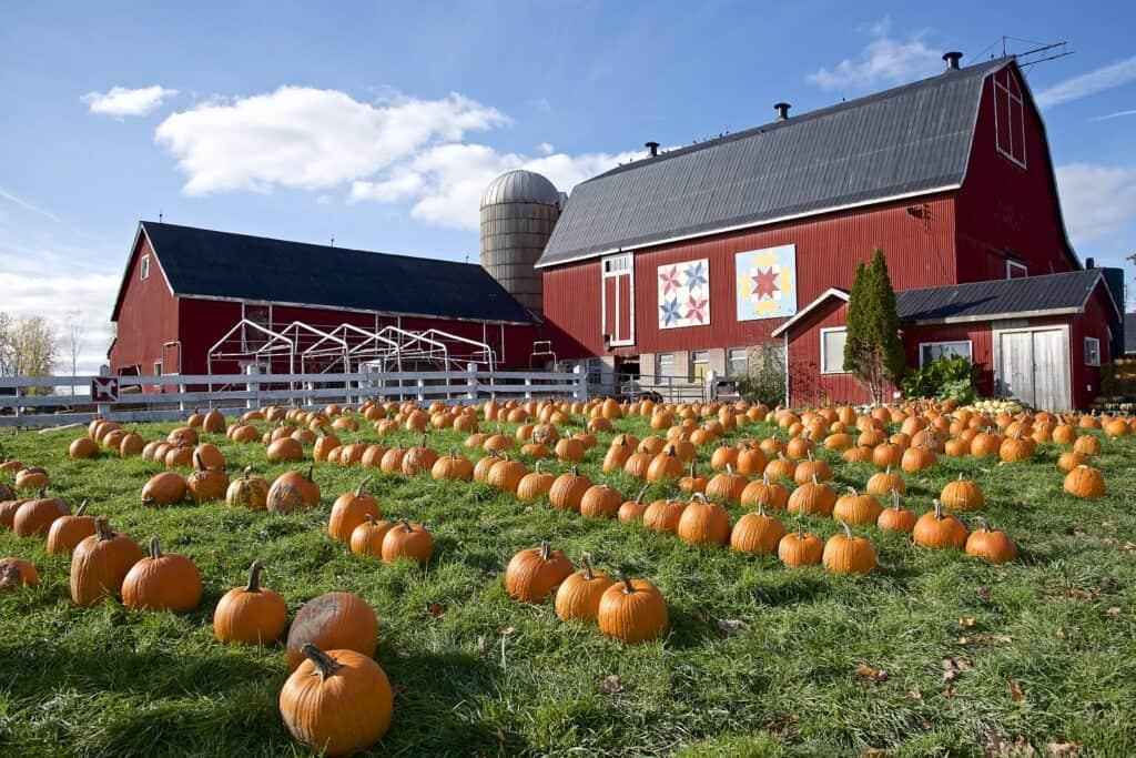 Auch in Kanada feiert man Halloween. Dort hat das Fest schon Volksfestcharakter. Viele Farmen bieten Kürbisse für leckere Speisen und zum Schnitzen an. Foto eltonlaw / Deposit