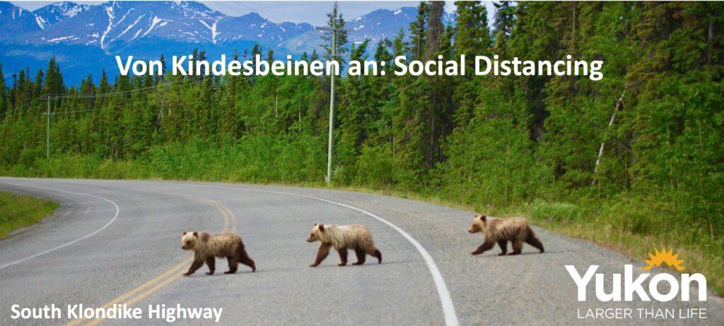 Social Distancing in seiner schönsten Art. Drei kleine Grizzlys auf dem South Klondike Highway. Foto Holger Bergold
