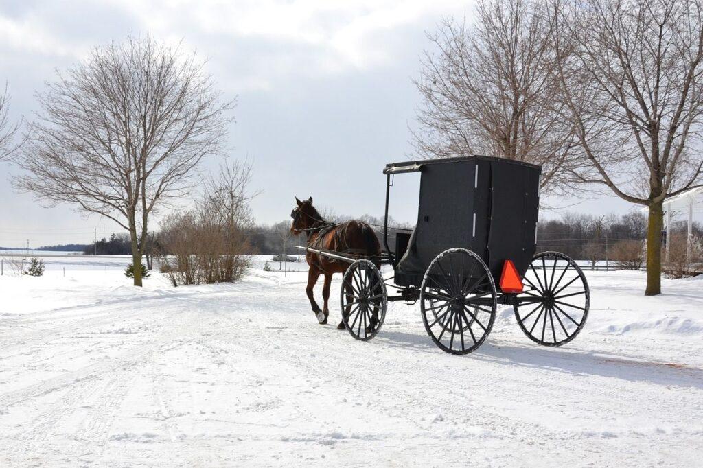 Viele Mennoniten-Familien sind auch heute noch ausschließlich mit Pferd und Kutsche unterwegs. Foto ArjanneHolsappel / Pixabay